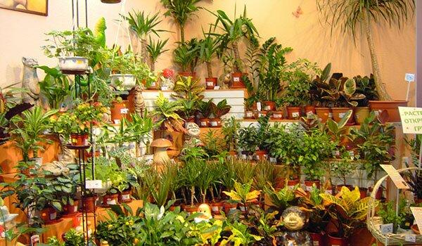 Разведение и продажа комнатных растений